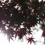 2015高尾山の紅葉巡り 特集後日は大混雑!