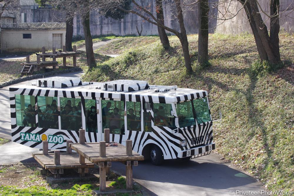 多摩動物園ライオンバス