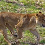 平日の多摩動物公園で動物撮影!カメラ設定と動物初心者の自分が意識した3つのこと