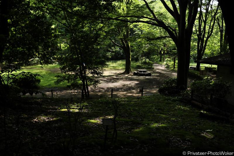 自然公園の森