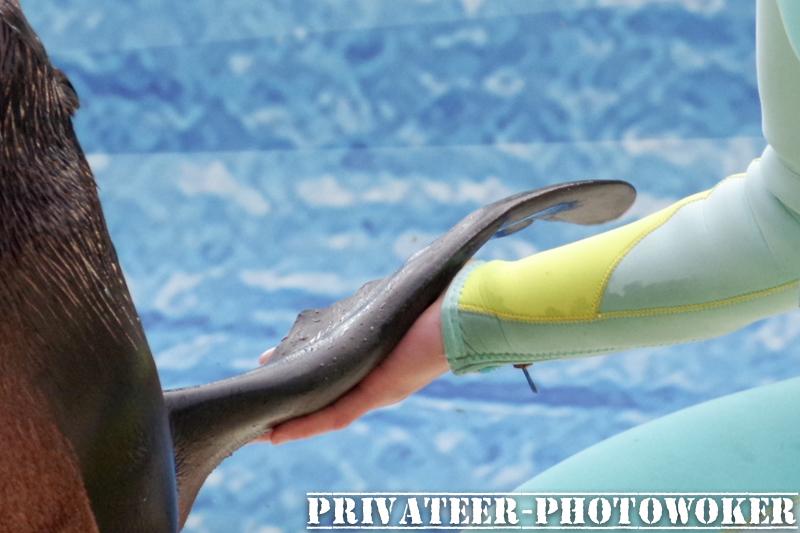 江ノ島水族館 ショー