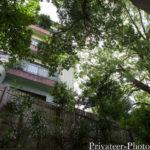 遊歩道から見る音無の森 緑風園