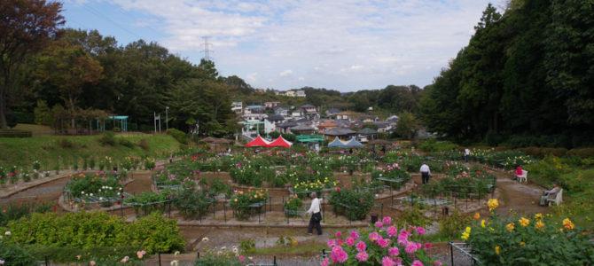 自然豊かな町田ダリア園と秋の薬師池公園でカメラ振り回してきた!
