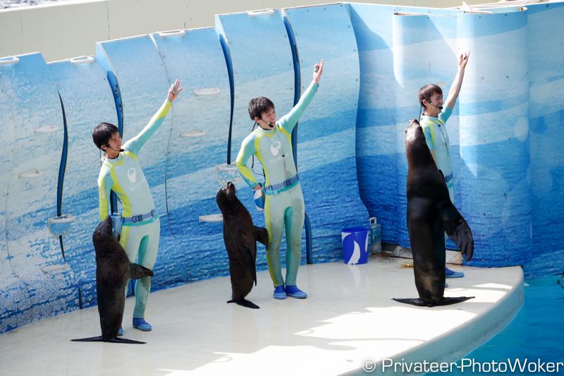 江ノ島水族館 アシカショー