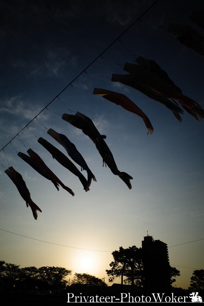 早朝の泳げ鯉のぼり2019
