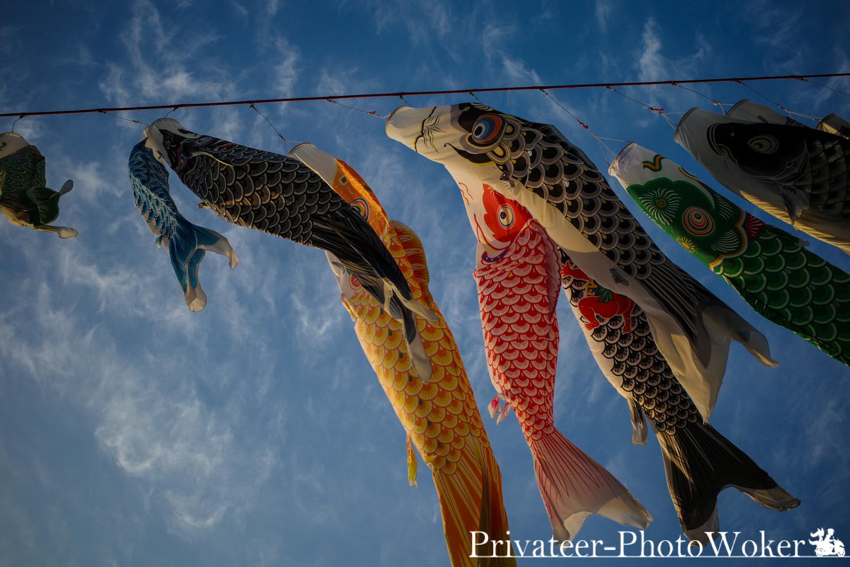 泳げ鯉のぼり2019 相模川
