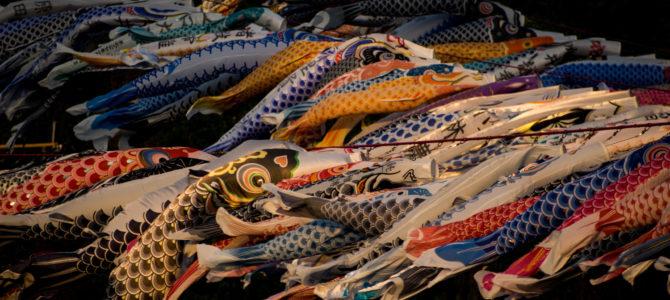 朝活ツーリングで休日お気に入りコース動画と相模川の泳げ鯉のぼり2019を撮ってきた!!