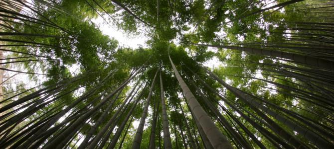 報国寺の竹の庭に合掌!鎌倉町外れの竹林写真スポット!