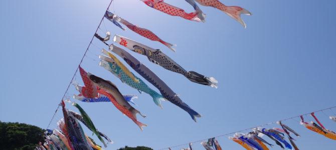泳げこいのぼり大会2016 毎年恒例な相模川のお祭り!