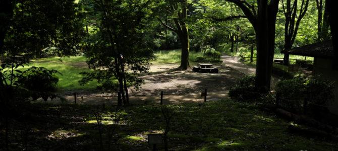町田の中にある大自然 芹ヶ谷公園で森林浴!