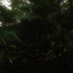 雨霧の中でホタルにリベンジ!インターバル撮影で祝フレームイン!