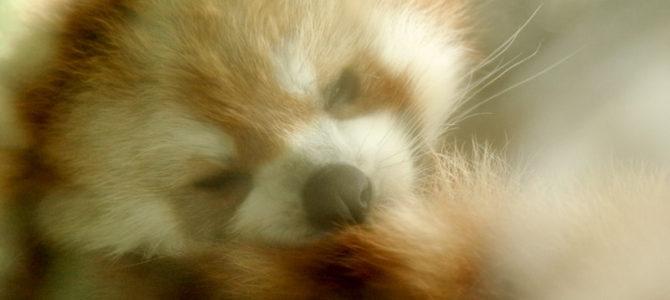 防水・防滴なペンタ装備で曇天小雨の横浜動物園ズーラシアに行ってきた!