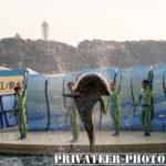 【PENTAX KPお試し前編!】江ノ島水族館のイルカ&アシカショーでHDDA55-300PLMが大活躍!