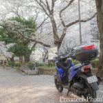 トリシティ155 桜並木