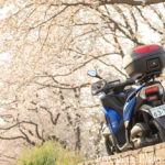 トリシティ155と行く2019年のお花見!神奈川県の相模川で満開の桜を撮ってきた!