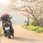 桜2019トリシティ155
