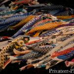 相模川鯉のぼり2019